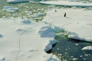 running_penguin